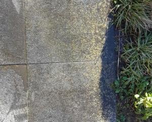 borstelaar reiniging terrastegel